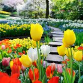 Path in spring park surrounded by multicolor flowers